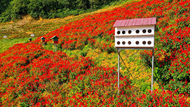 Sắc hoa rực rỡ từ chân núi lên tới đỉnh Fansipan, chỉ ước hết dịch để được xách ba lô lên và đi - Ảnh 4.