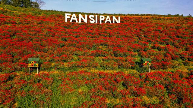 Sắc hoa rực rỡ từ chân núi lên tới đỉnh Fansipan, chỉ ước hết dịch để được xách ba lô lên và đi - Ảnh 5.