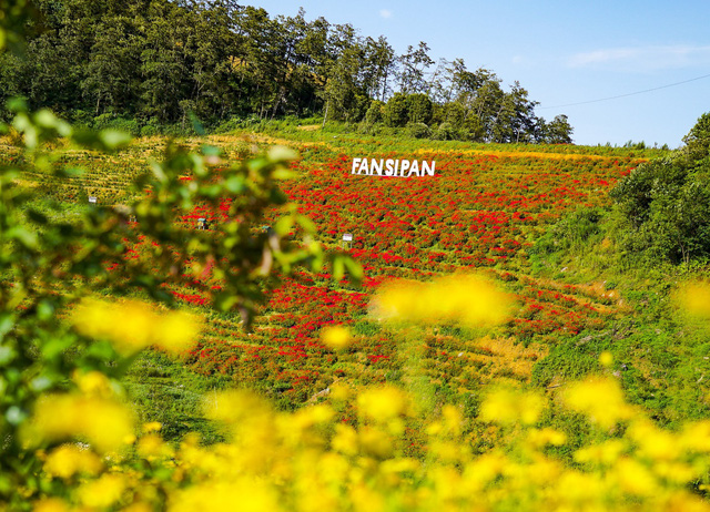 Sắc hoa rực rỡ từ chân núi lên tới đỉnh Fansipan, chỉ ước hết dịch để được xách ba lô lên và đi - Ảnh 6.