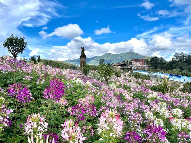 Sắc hoa rực rỡ từ chân núi lên tới đỉnh Fansipan, chỉ ước hết dịch để được xách ba lô lên và đi - Ảnh 9.